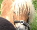 Donderdagavond 19 februari; Jonge paarden introductiecursus