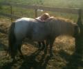 Zondag 22 februari Ponymaatjes instuif
