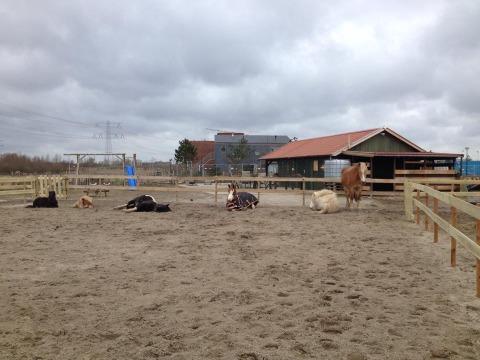 Nieuwe pony's op de Boerderij – kom je morgen kijken?