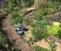 Cursus eetbare tuin
